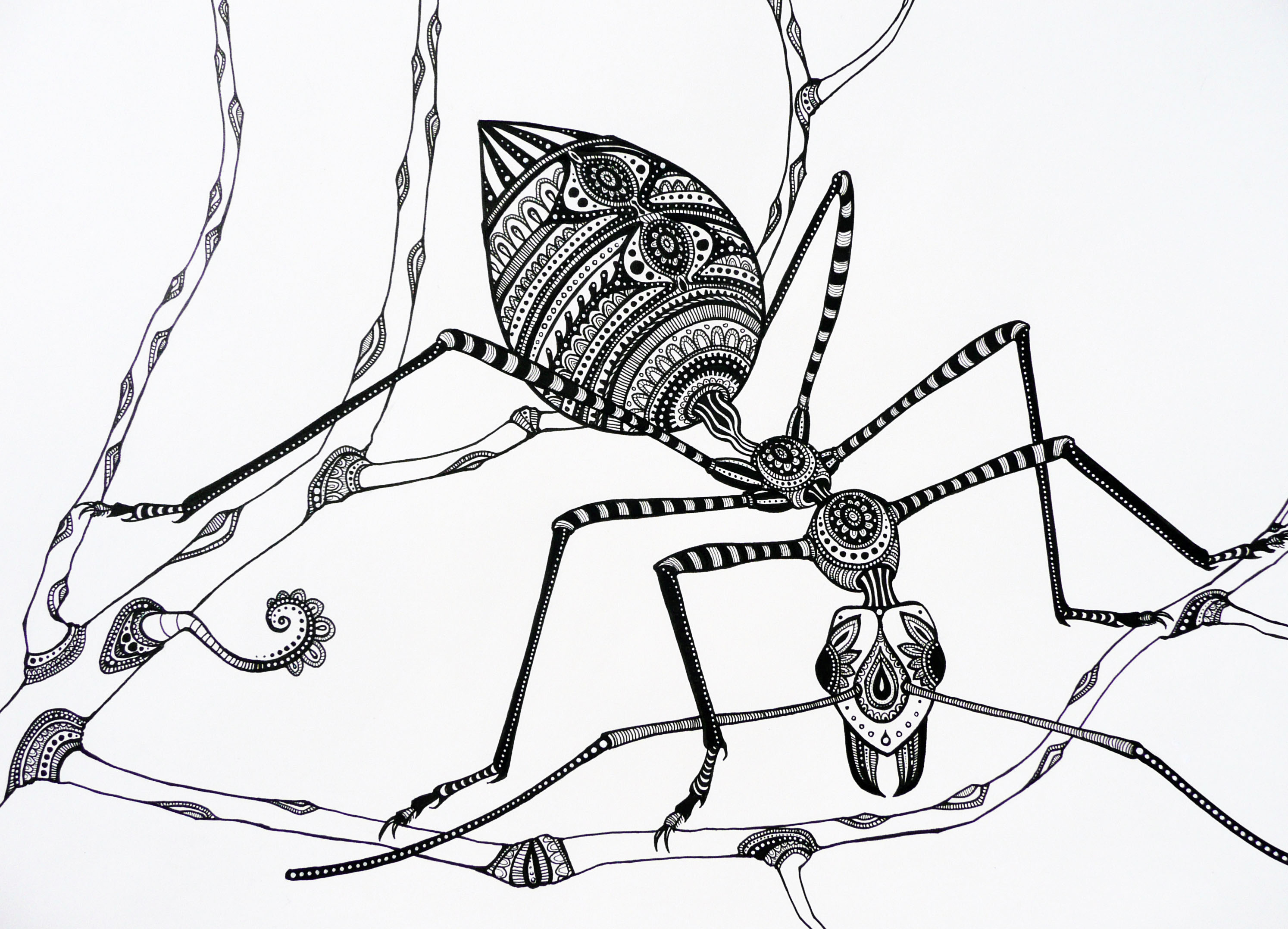 Uncategorized Drawing Of An Ant green tree ant kerith ogden ant