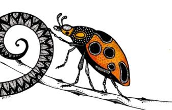 ladybird on tendril